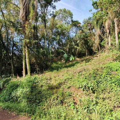 Belo terreno com vertente na cidade de Morro Reuter-RS