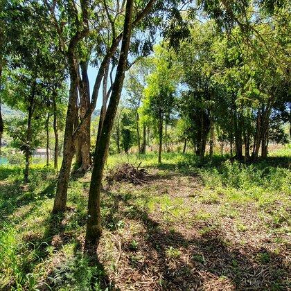 Terreno amplo e arborizado em Picada Café na serra gaúcha
