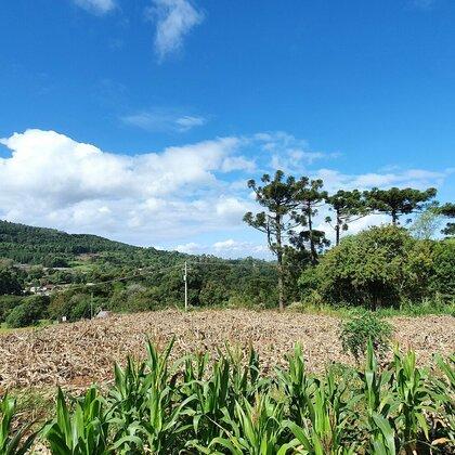 Terreno plano e com vista no centro de Linha Nova na serra gaúcha