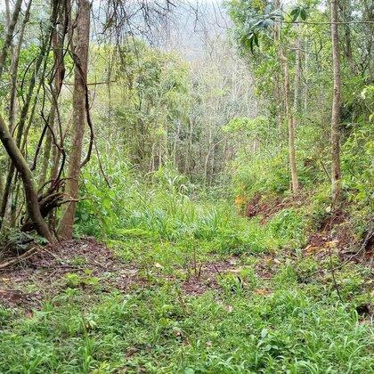 Área de terras com potencial de vista em Nova Petrópolis na serra gaúcha