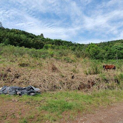 Área de terras com vertente e córrego em Linha Nova na Serra Gaúcha.