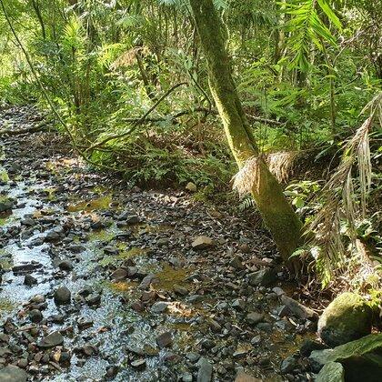 Área de terras com riacho e mata nativa em Picada Café, na Serra Gaúcha