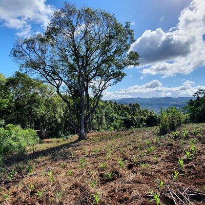 Área de terras com vista panorâmica em Nova Petrópolis na serra gaúcha