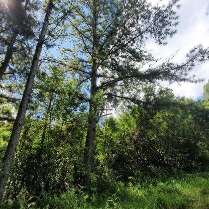 Área de terras com potencial de vista em Picada Café na serra gaúcha