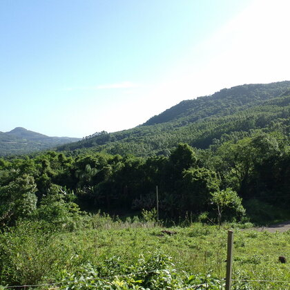 Terreno amplo com arborização em Picada Café, na Serra Gaúcha