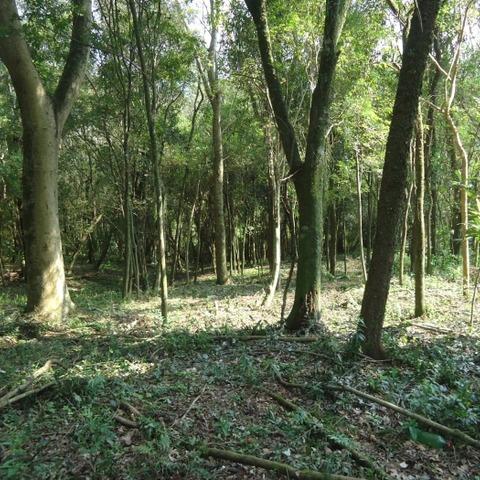 Terreno arborizado margeado por Rio em Picada Café, na serra gaúcha