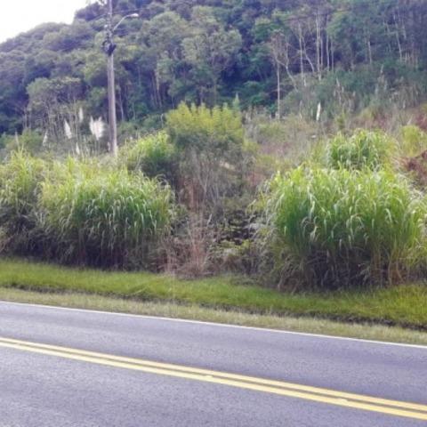 Terreno às margens da rodovia RS-235, com área de 420,00 m².